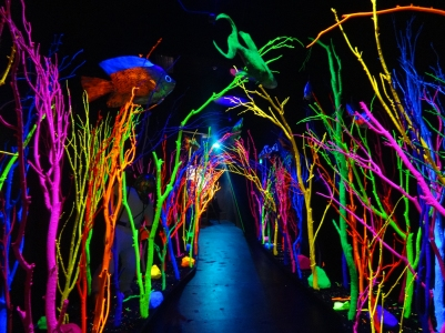 Meow Wolf Exhibit—Santa Fe, New Mexico